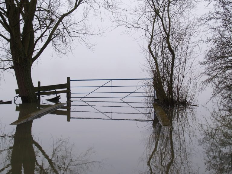 Metal gate sitting between two trees and surrounded by Nebraska flood waters