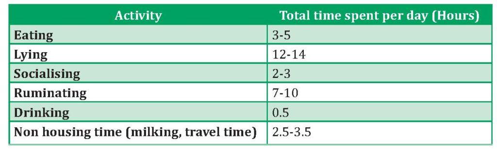 basic cow activity chart